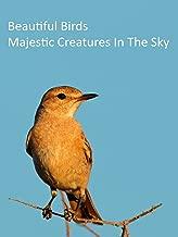 Beautiful Birds - Majestic Creatures in The Sky