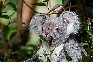 Best koala ears diy Reviews
