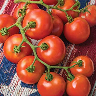 Burpee 'Fourth of July' Hybrid | Red Slicing Tomato | 50 Seeds
