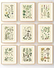 Ink Inc Botanical Prints Woodland Plants set of 9 5×7 Home Decor Wall Art Wildflower..
