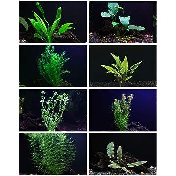 30+ Stems - 8 Species - - Anacharis, Amazon, Rotala, Ludwigia and More!