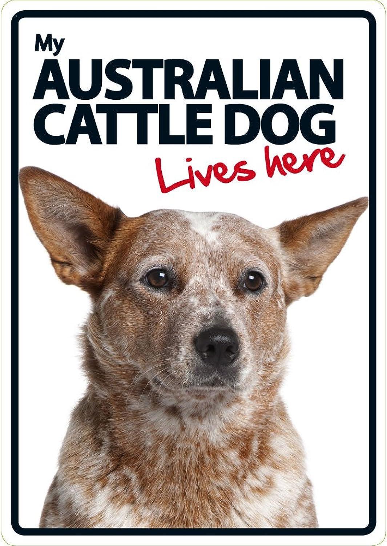 Australian Cattle Dog Lives Here Plastic Sign