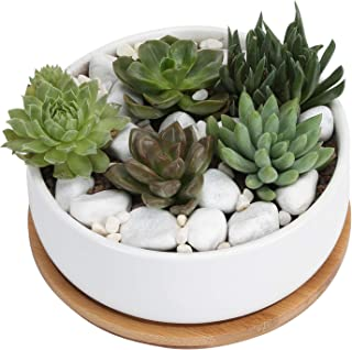6 Inch White Ceramic Round Succulent Cactus Planter Pot with Drainage Bamboo Tray