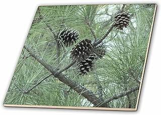 3dRose ct_23812_3 Pine Cones Ceramic Tile, 8-Inch