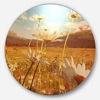 Designart Blooming Chamomiles in Meadow Flower Disc Metal Artwork 23X23 - Disc of 23 inch MT12323-C23