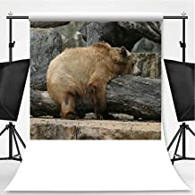 Brown Bear on Log at San Antonio Zoo Photography Background,087382 for Video Photography,Pictorial Cloth:6x10ft