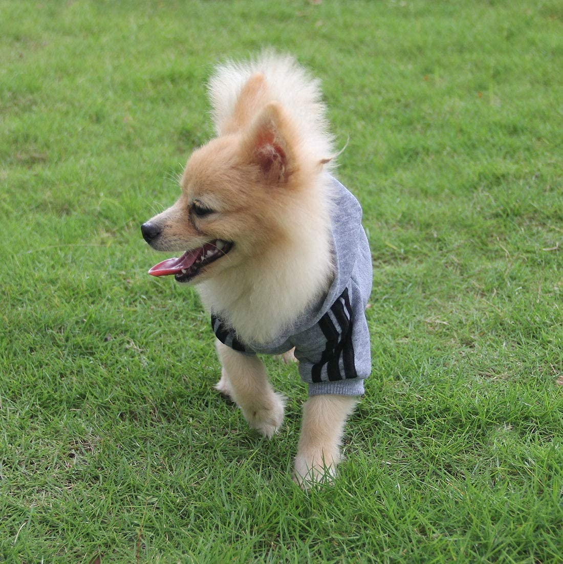 QiCheng/&LYS Hundemantel Adidog Hund Hoodies Kleidung Pet Puppy Katze Niedlicher Baumwoll Warm Hoodies Coat Pullover