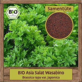 BIO Asia Salat Samen Asia Pflücksalat Wasabino Brassica rapa Gemüsesamen ganzjährig & winterhart