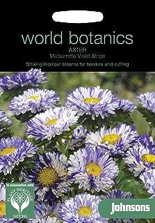 johnsons World botanics Flower - Aster Matsumoto Violet Stripe - 100 Seeds