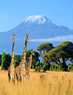Eaiizer Poster Wall Art Print Three Giraffe on Kilimanjaro Mount in National Park 16x24 Inches Artwork for Home Bedroom Decor