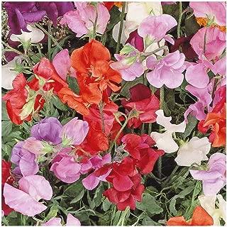 Everwilde Farms - 1/4 Lb Knee High Mix Sweet Pea Wildflower Seeds - Gold Vault
