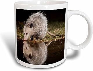 """3dRose 84369_2""""Virginia Opossum Wildlife, Hill Country, Texas-NA02 RNU0298-Rolf Nussbaumer"""" Ceramic Mug 15 oz White"""
