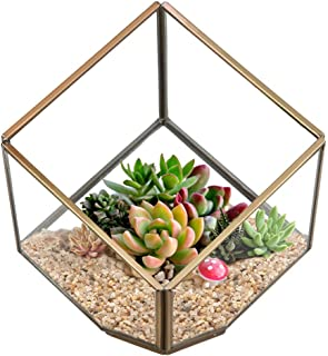 Plantas suculentas soporte, ZZM cristal casa para plantas, terrario recipiente, DIY pieza central jarrón maceta suculentas, 10* 10* 10cm