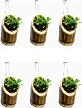RAREPRODUCTS VERTICALHANGING Planter Set of 6 Pot with NailScrew Free -6 nos