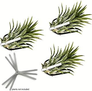 Air Plant Holder for Vertical Garden 3 Pack Wall Planter for House Plants, Hanging Plant and Tillandsia Air Plants Living Wall Terrarium. Great Wall Decorations for Living Room   No plants included S3