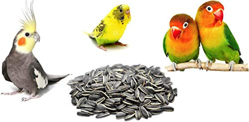 COLOURFUL AQUARIUM™ - Natural & Healthy Sunflower Seeds | Daily Birds Food (Sunflower Seed, 1800g)