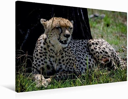 CALVENDO Gepard, 75 x 50 cm
