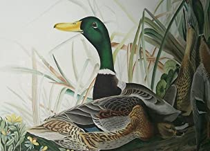 Counted Cross Stitch Patterns: John James Audubon, Mallard or Wild Ducks