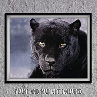 Intimidating Black Panther-8 x 10- Wall Art- Ready to Frame- Home Décor, Office Décor & Wall Prints for Animal, Safari & Jungle Theme Wall Decor. Feel the Fright of the Big Black Cat! Great Gift!