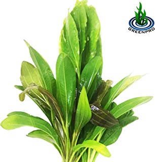 Greenpro 3 Species Amazon Sword 10+ Stems Echinodorus Bleheri | Red Rubin | Parviflorus Rosette Easy Live Aquarium Plants Package