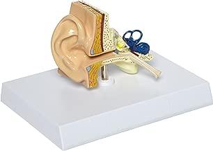 GPI Anatomicals Human Ear Model