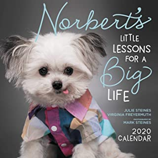 Steines, J: Norbert'S Little Lessons for a Big Life 2020 Squ