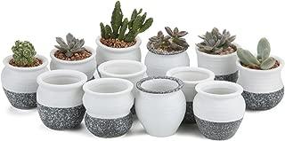 Best ceramic succulent pots Reviews