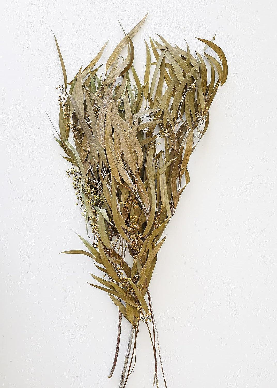 half Sage Green Preserved Seeded Eucalyptus 18-28