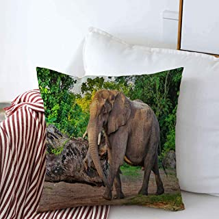 Starooct Throw Pillows Covers Cushion Case Asian Green Lonely Elephant Walking Path Deforestation African Nature Big Bushes Chennai Design Cotton Linen for Fall Couch Home Decor 16 x 16 Inches