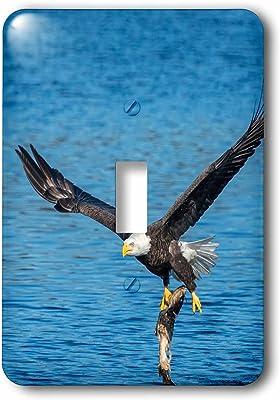Near Big Sur 3dRose lsp/_88308/_2 Turkey Vulture Bird California Us05 Cha0106 Chuck Haney Double Toggle Switch