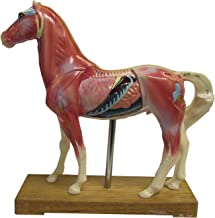 Horse Acupuncture Points Model with Authoritative Booklet. Equine