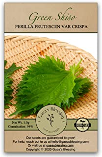 Gaea's Blessing Seeds - Green Shiso Seeds (Perilla) 400+ Seeds, Non-GMO, Kaori Ao Shiso, Open-Pollinated, 94% Germination ...