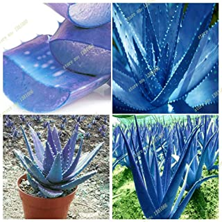 Best aloe seeds for sale Reviews