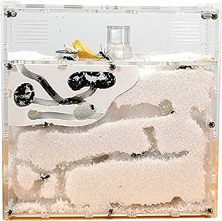 MINORI アリの巣 観察キット (砂は別売) アリの巣 蟻 アリ飼育キット アリ飼育セットアリ 飼育 観察