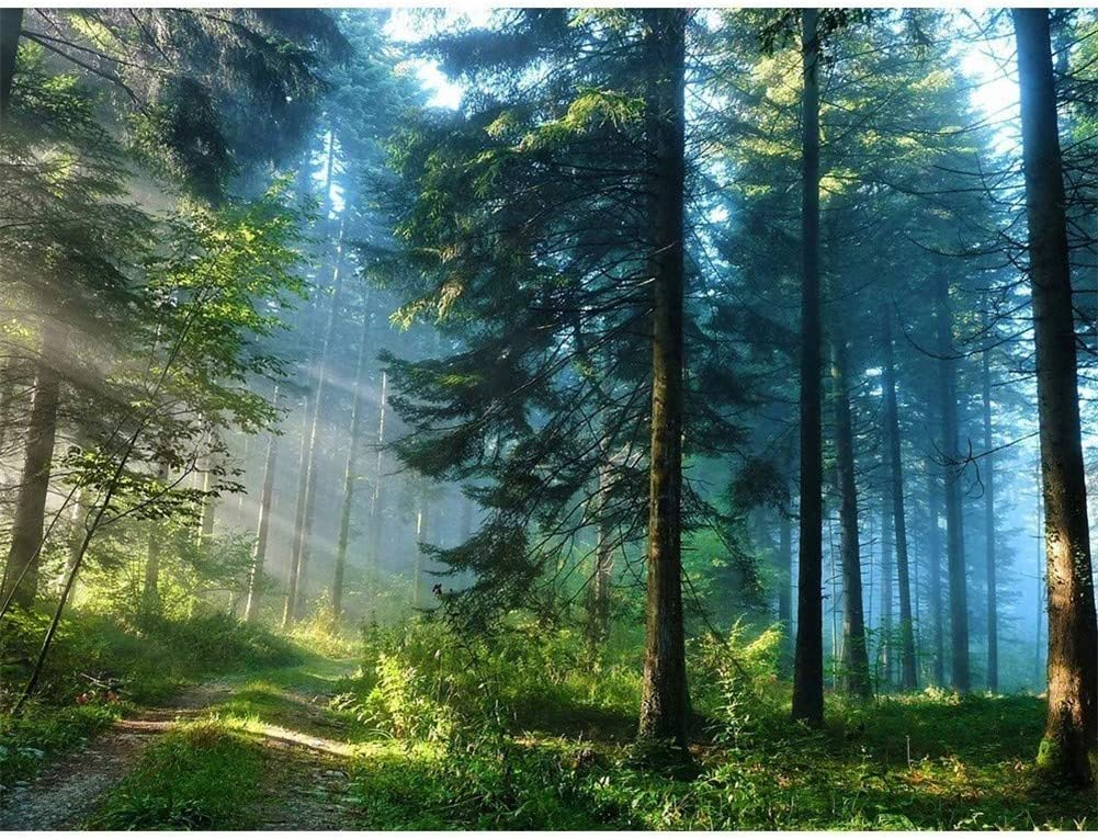 DIY 5D OFFicial shop Max 75% OFF Diamond Painting Kits for Sunny Adults Landscape Forest P