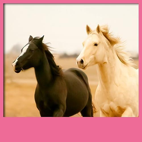 Pferde Live Wallpapers
