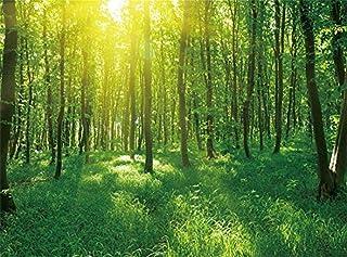 Sdevw غابة الغابة خلفية دريم لاند المتتالية الطريق الأوساخ الأشجار القديمة الربيع صورة خلفية الأطفال الكبار صور الاستوديو ...