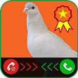 Pigeon Prank Call