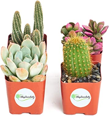 Shop Succulents   Cactus & Succulent Collection of Live Plants, Hand Selected Variety Pack of Cacti and Mini Succulents   Col