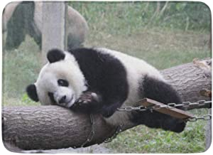 Doormats Bath Rugs Outdoor/Indoor Door Mat Adorable Playful Giant Panda Cub in The Playground Animal Bamboo Chinese Bathro...