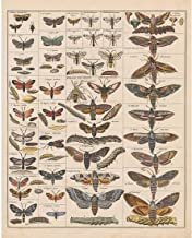 Meishe Art Poster Print Vintage Moth Insects Breeds Identification Reference Chart Species Collection Entomology Diagram Classroom Club Wall Decor