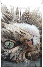 maine coon grijze kat close-up pluizige Tapestry Muur Tapestry Voor Slaapkamer Woonkamer Muur Art Tapestries Decor Slaapka...