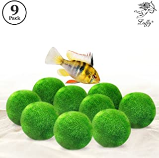 Luffy Marimo Moss Balls - Pack of Aesthetically Beautiful Plants - Create Healthy Environment for Aquatic Pets - Low Maintenance Live Plant