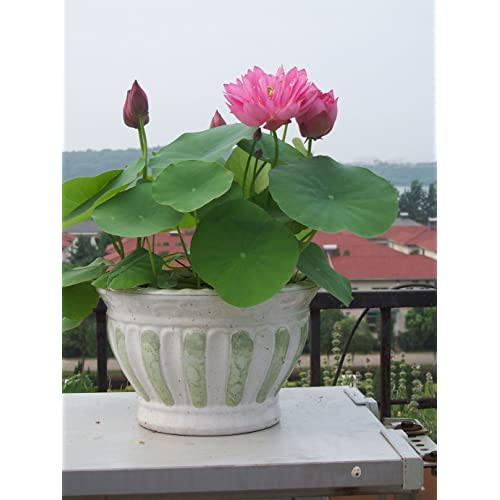 Flower Plant Seeds Buy Flower Plant Seeds Online At Best Prices In