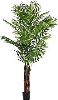 Little Green House 1131-210 Green Areca Palm Garden Decor