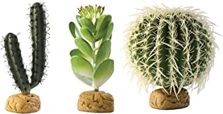 Exo Terra Cactus Bundle 3 Pack - Finger Cactus, Jade Cactus, and Barrel Cactus Terrarium Plants