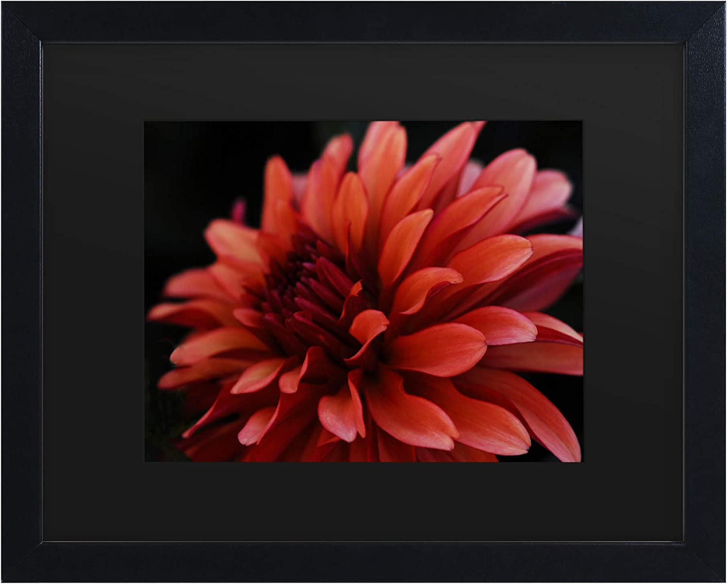Trademark Fine Art Red Dhalia by Kurt Shaffer, Matte, Black Frame 11x14