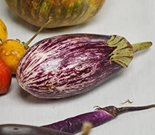 Shooting Stars Eggplant Seeds - 10+ Rare Seeds + FREE Bonus 6 Variety Seed Pack - a $29.95 Value! Packed in FROZEN SEED CAPSULES for Growing Seeds Now or Saving Seeds For Years