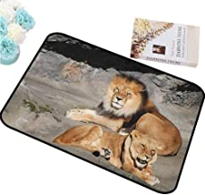 HCCJLCKS Interesting Doormat Zoo Male and Female Lions Basking in The Sun Wild Cats Habitat King of Jungle Non-Slip Door mat pad Machine can be Washed W30 xL39