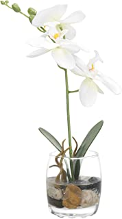 Best orchid in clear vase Reviews
